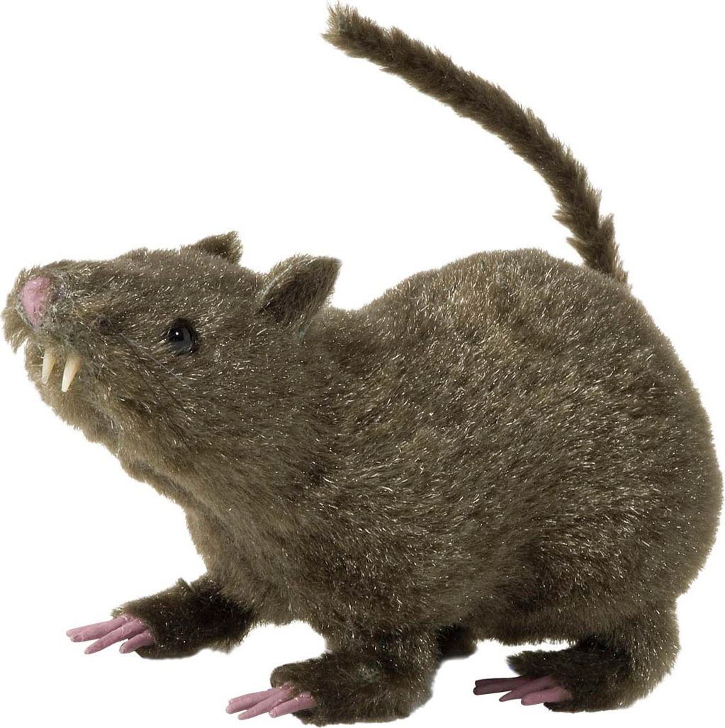 Behaarde rat