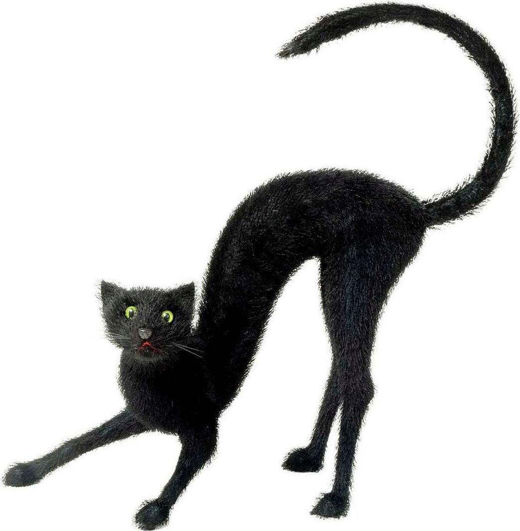 Grote zwarte behaarde kat