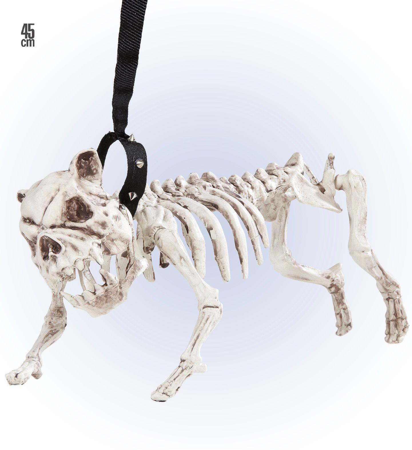 Honden skelet