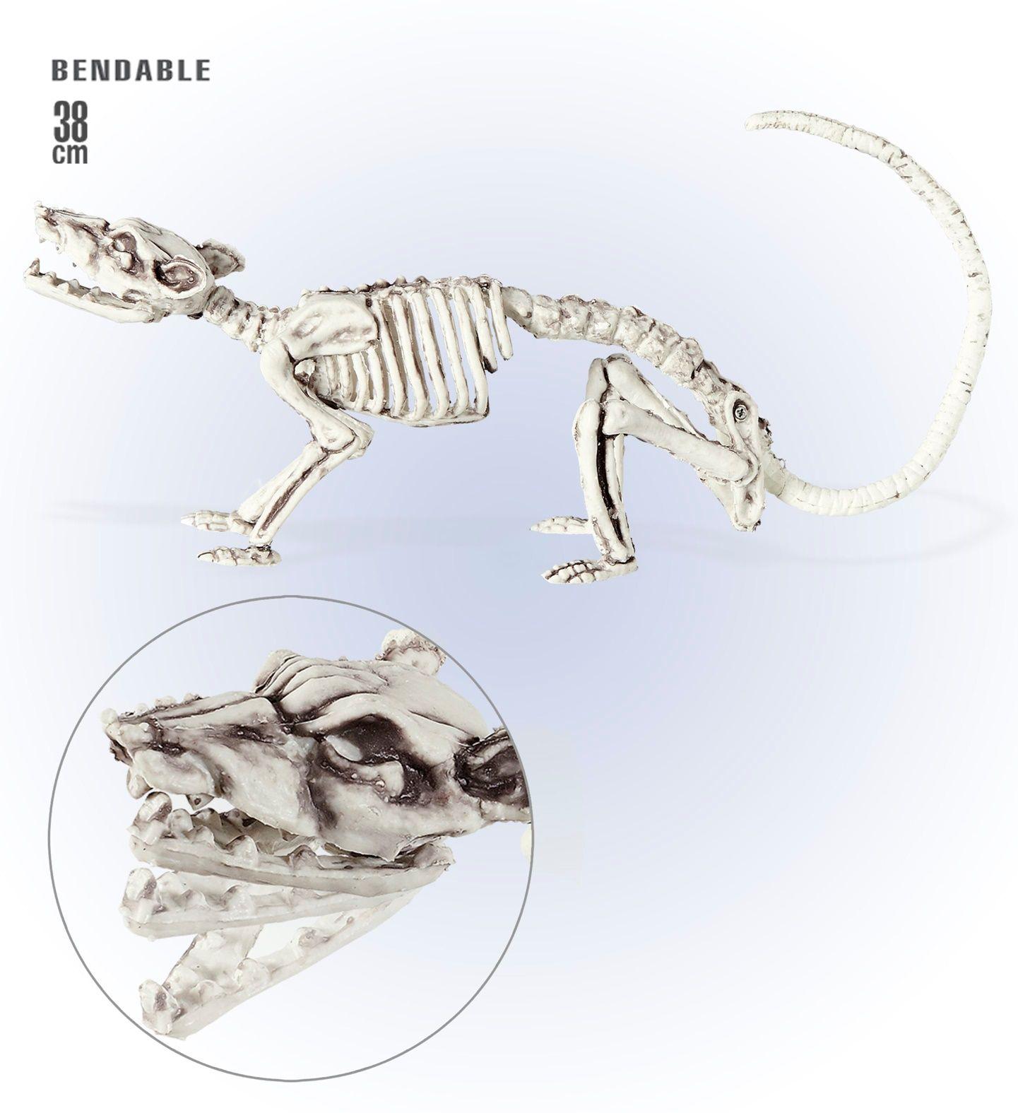 Ratten skelet