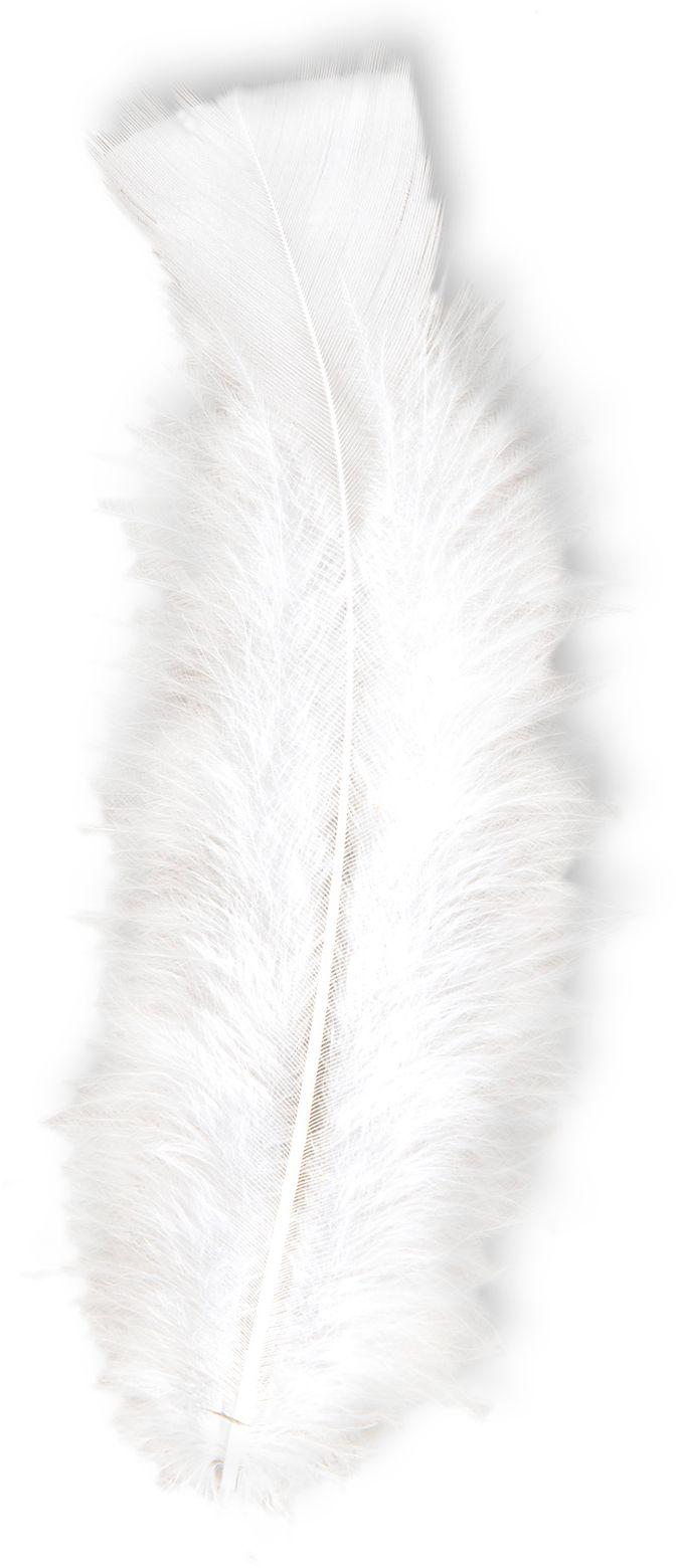Witte veren 50 stuks